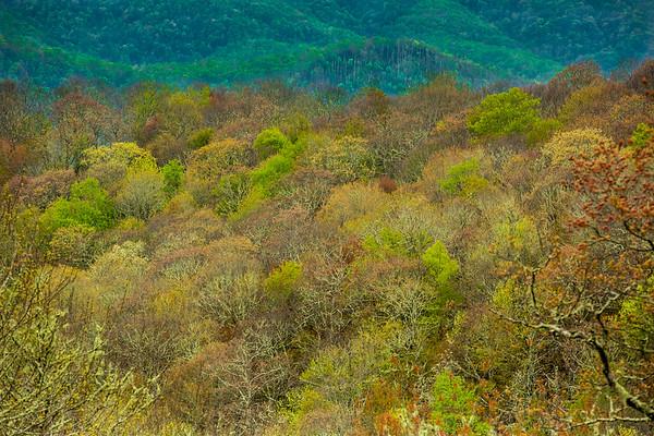 2017_5_6-12 Smoky Mountains National Park-1119