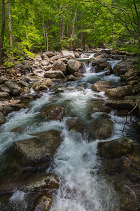 2017 _5_6_12 Smoky Mountains -2605