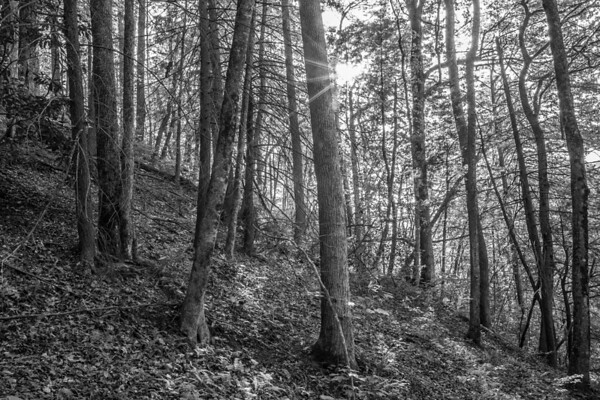 2017_5_6-12 Smoky Mountains National Park-1404-2