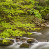 2017_5_6-12 Smoky Mountains National Park-1083-2