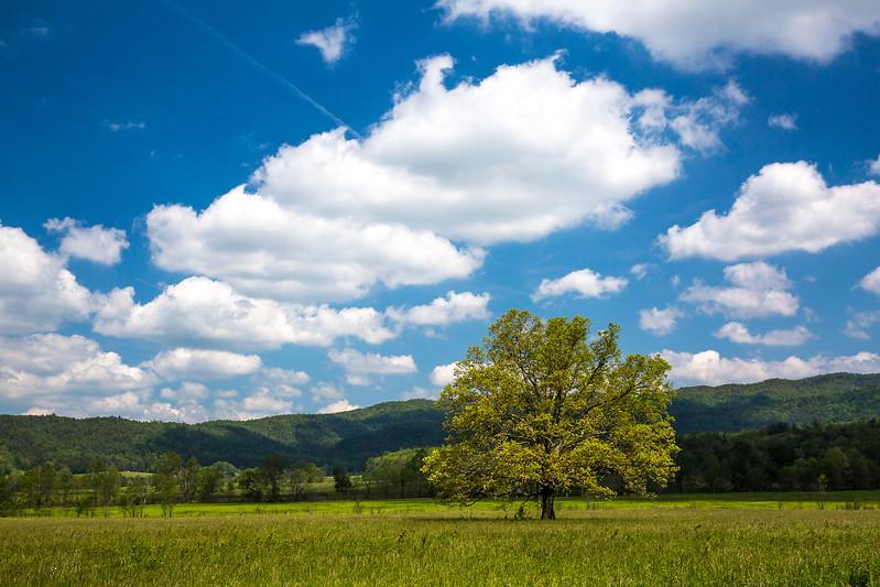 2017_5_6-12 Smoky Mountains National Park-1345-2