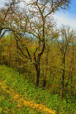 2017_5_6-12 Smoky Mountains National Park-1276