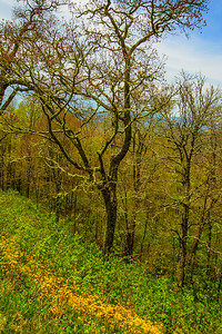 2017_5_6-12 Smoky Mountains National Park-1276