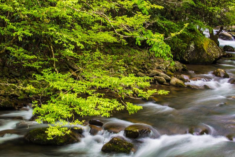 2017_5_6-12 Smoky Mountains National Park-1082-2