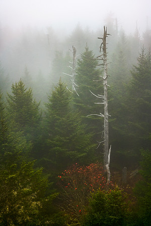 Early Morning at Clingmans Dome
