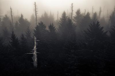 Foggy Morning, Clingmans Dome