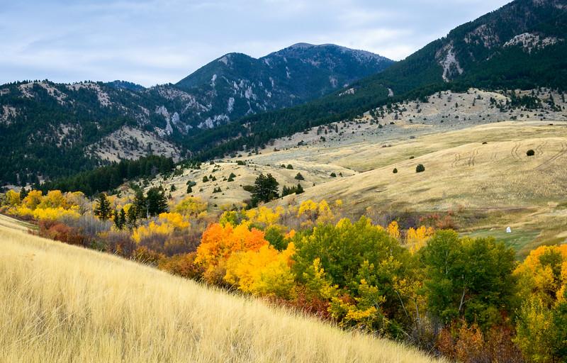 Fall   Lyman Creek, MT