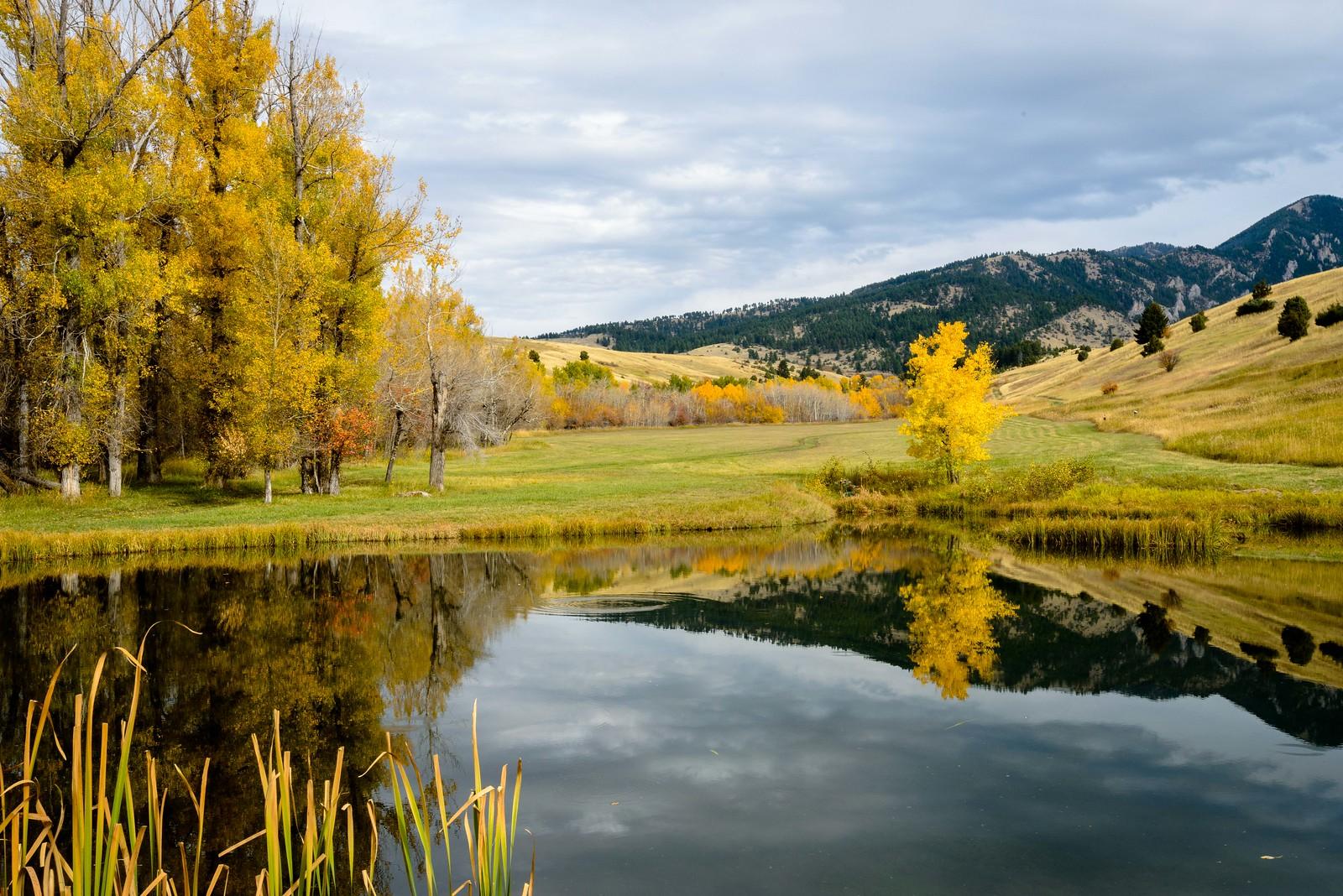 Fall | Lyman Creek, MT