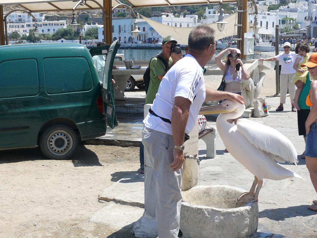 103_365 Greece Mykonos Pedro