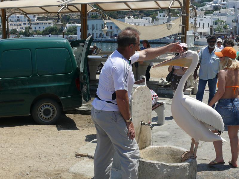 103_366 Greece Mykonos Pedro