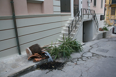 Broken plant
