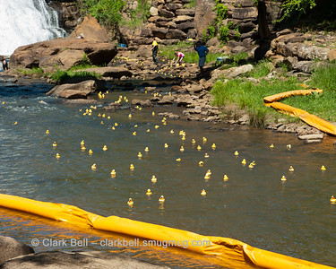 2014 Greenville Duck Derby 19