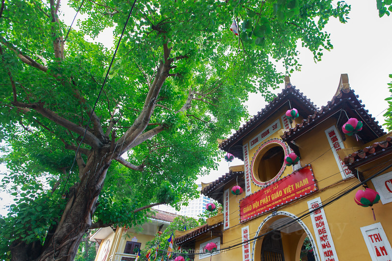 Bodhi trees