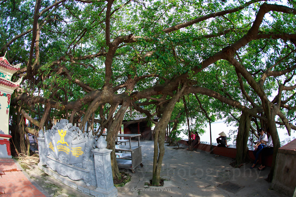 Heritafe tree