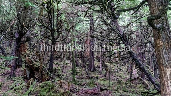 Primevil Forest