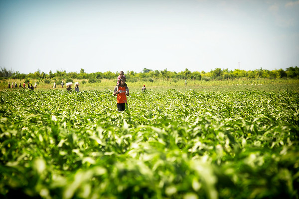 A father carries his son through a field in Haiti. 2009