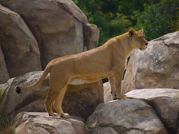 Zoo 2009