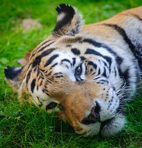 Helloo...I'm SLEEPING