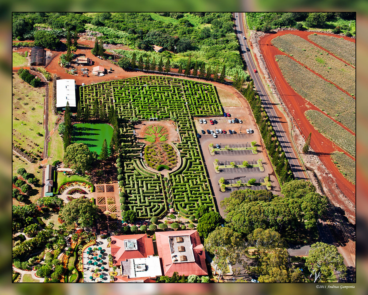 """The Dole Pineapple Plantation Visitors Center near Wahiawa with a maze from which I have been told they must extricate an occasional visitor who doesn't make their way out by nightfall.  Since my family worked for the DelMonte Pineapple Plantations in Kunia, in order to avoid getting in trouble for having anything named """"Dole"""" in my possession, I must claim that these photos are a reconnaissance of the enemy."""