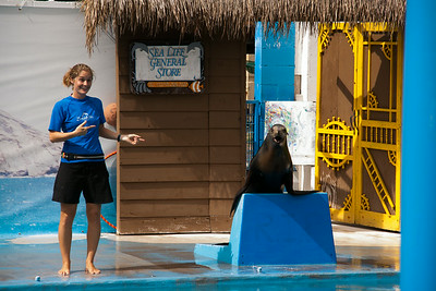 Adressing all sea lions everywhere