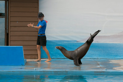 Dancing sea lion