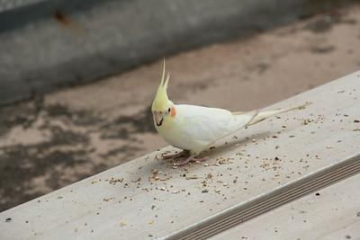 Peckish bird