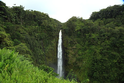 Akaka Falls near Hilo, Hawaii.  About twice as tall as Niagara Falls.  Apparently there are shrimp and fish that climb this waterfall - of course they can't swim up it, so they climb the wet rocks underneath it, with special grasping adaptations.