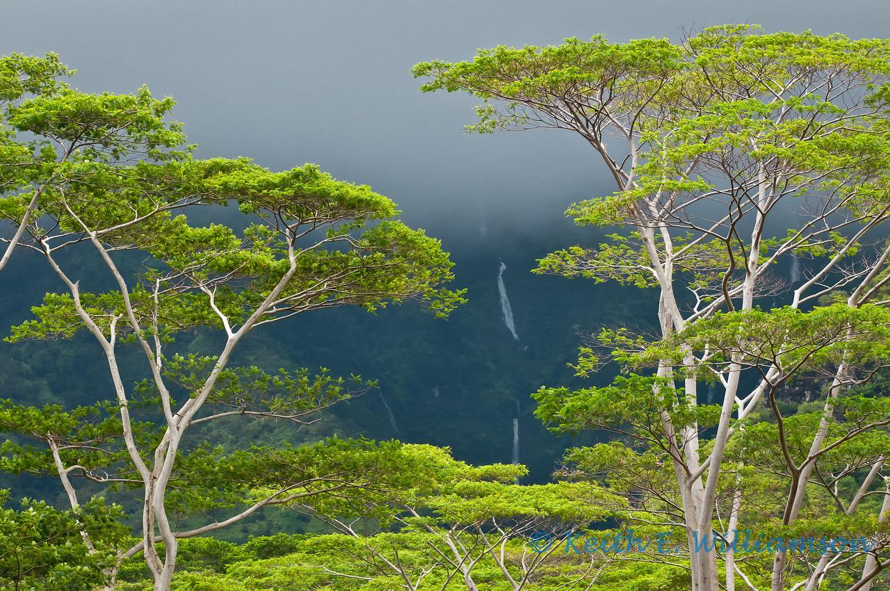 Trees and waterfall, Kauai