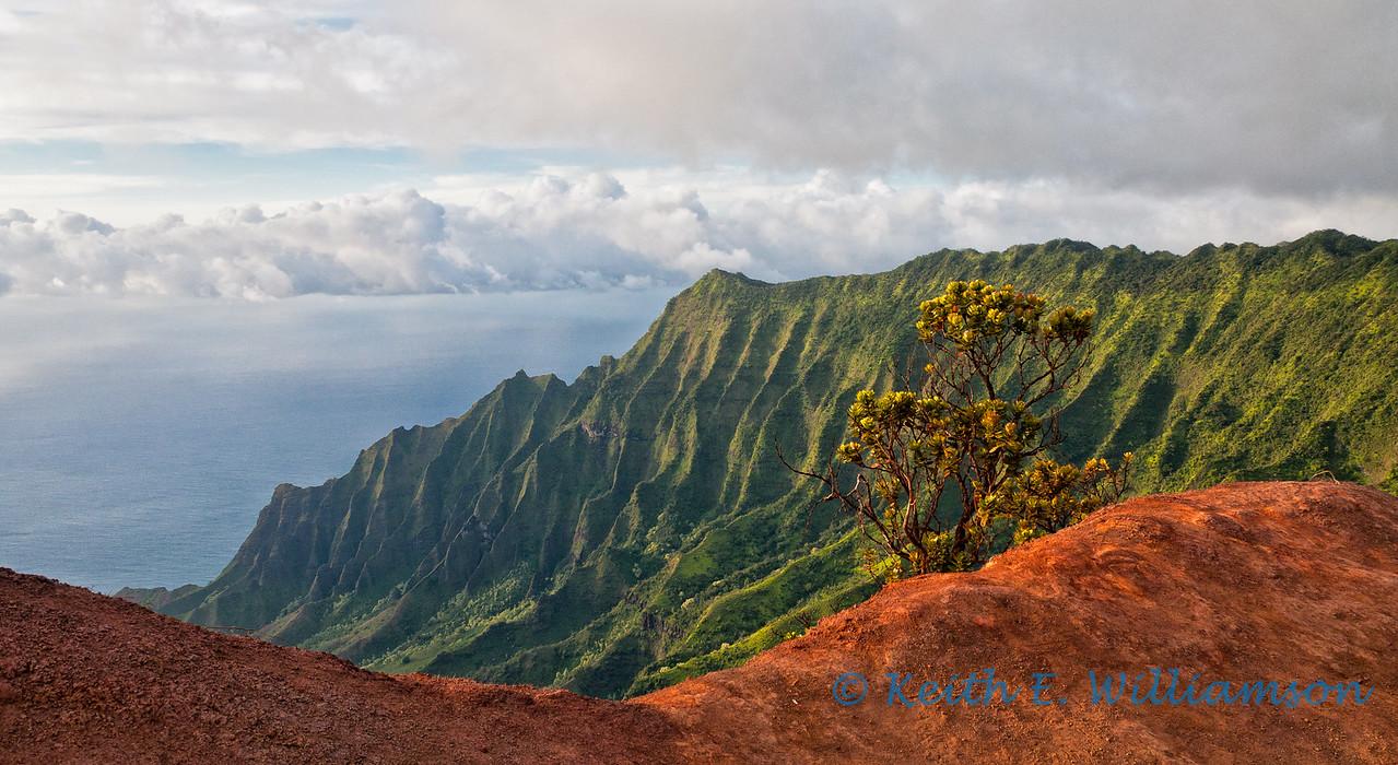 Kalalau Valley from Pu'u o Kila lookout, Kauai