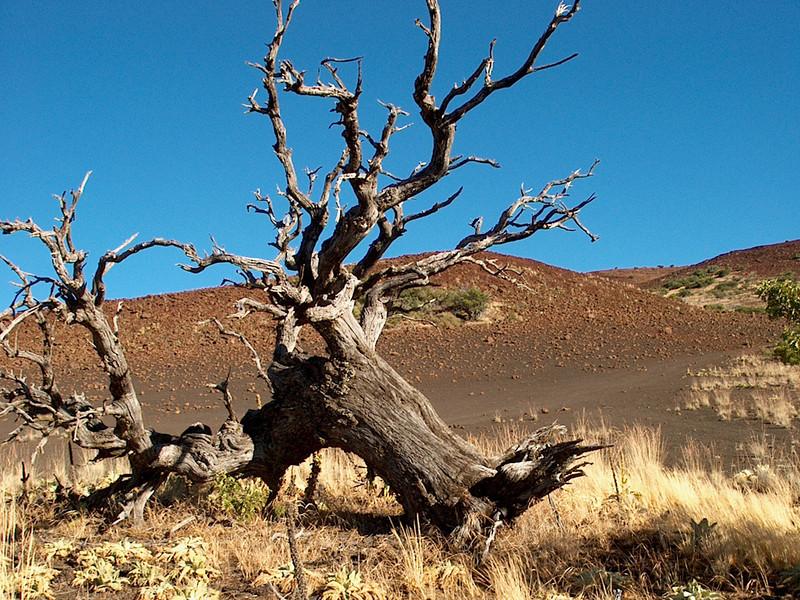 Fallen Tree, Hale Pohaku, Mauna Kea, Hawai\'i