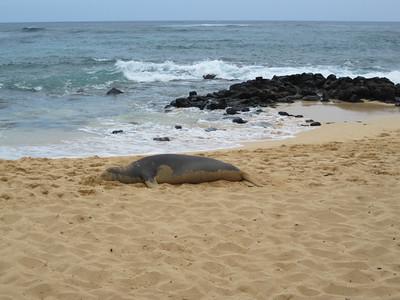 2009 07 24 Monk Seal 005