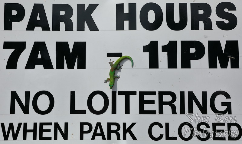 No Loitering sign gecko