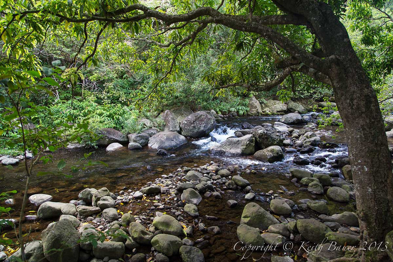 Another lush stream in the Iao Valley