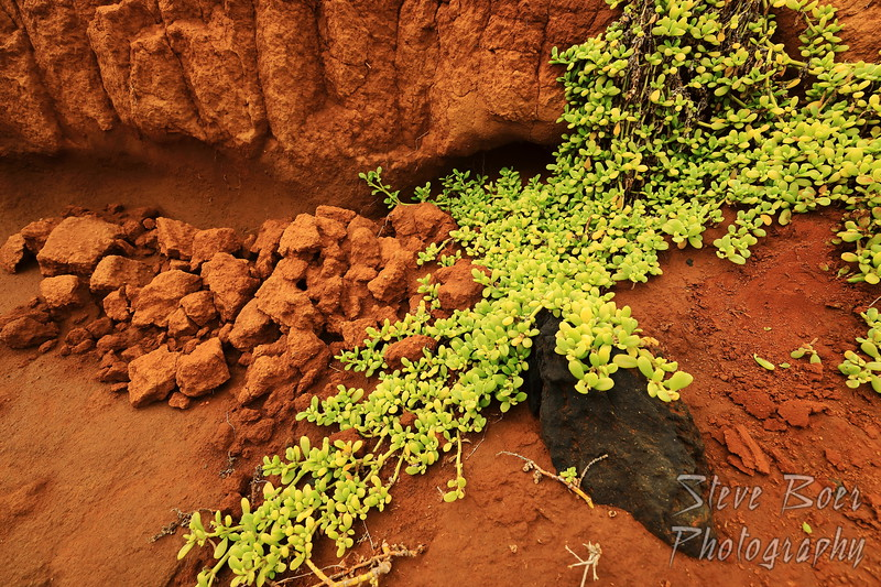 Green plants, red earth, black rock