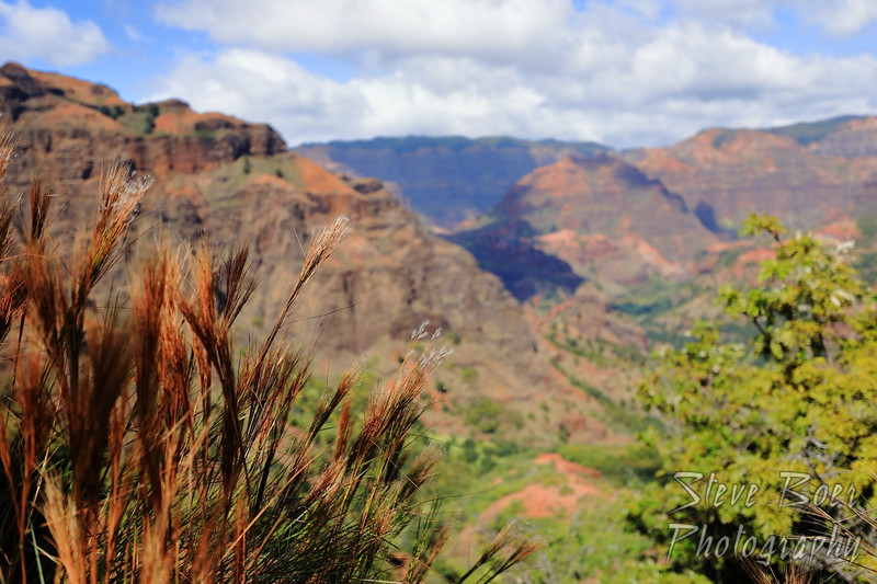 Grass with a view of Waimea Canyon