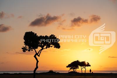 Oahu Sunrise Stroll
