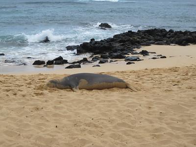 2009 07 24 Monk Seal 002