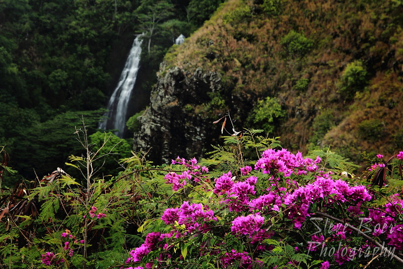 Flowers by Opaeka'a Falls