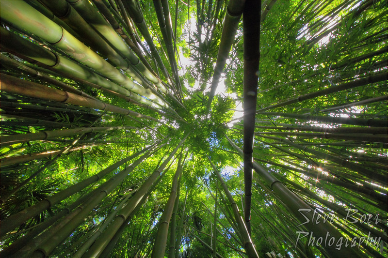 Bamboo goes up