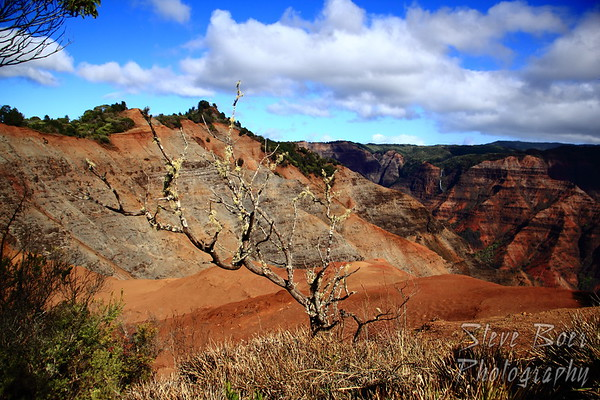 Tree at Waimea Canyon