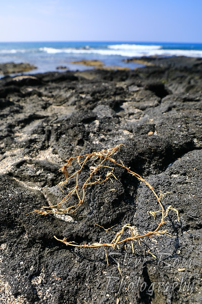 Crown of Thorns seaweed second angle