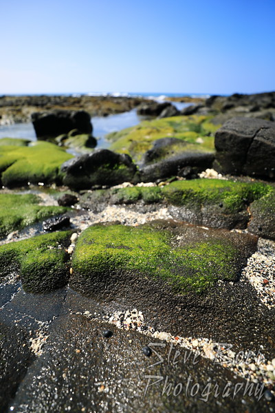 Algae on Lava