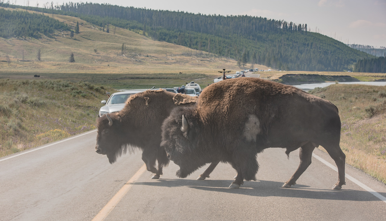 Hayden Valley - Yellowstone National Park, Wyoming - Part 4