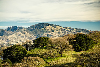 Acalanes Ridge - View of Mt. Diablo