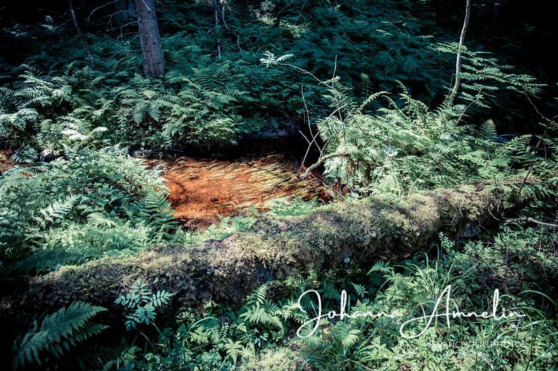 Helvetinportti Pohjois-karjala