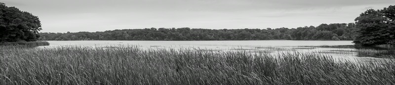 The eastern end of Coote's Paradise
