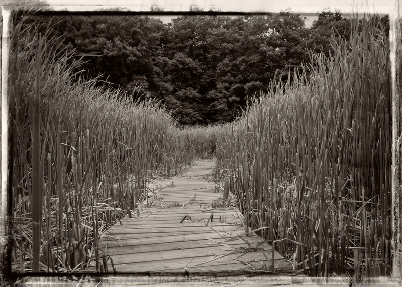 Boardwalk to the lookout at the Marsh Trail Coote's paradise