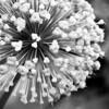 Plant Explosion