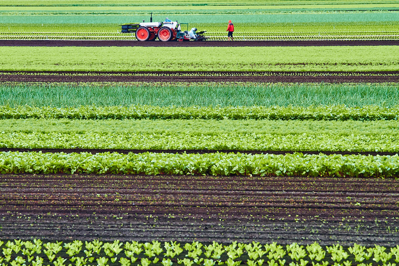 Tractor and Rows
