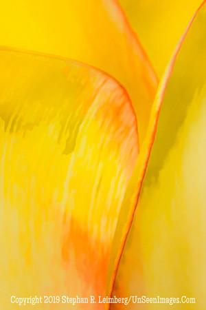 Yellow Streak 20130418_3474